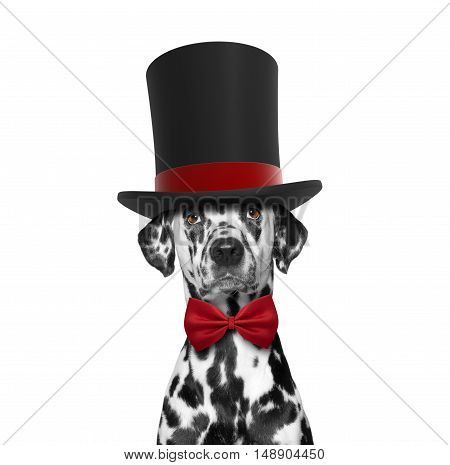 Dog in a high hat cylinder and necktie -- isolated on white
