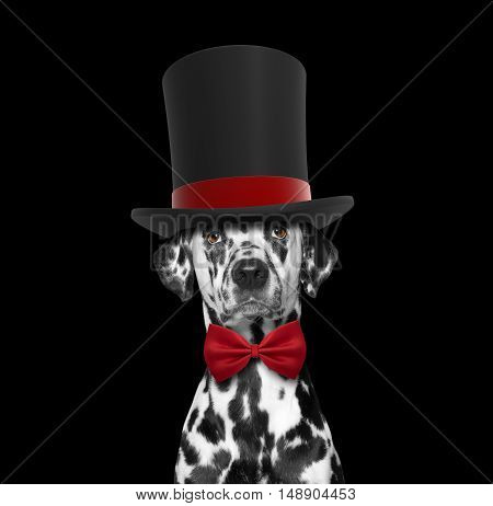 Dog in a high hat cylinder and necktie -- isolated on black