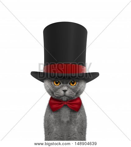 Cute cat in a high hat cylinder and necktie -- isolated on white