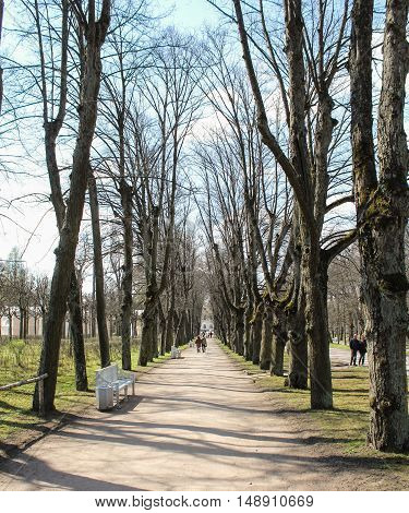 St. Petersburg, Russia - 3 May, Naked trees along the avenue, 3 May, 2016. People and spring landscape in Pavlovsk park.