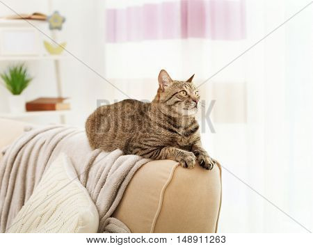 Grey tabby cat lying on sofa backrest