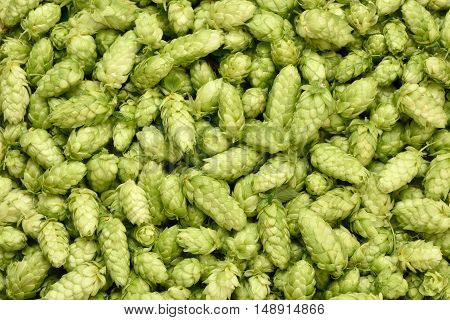 Hops Background.