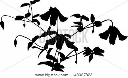 illustration with garden flower silhouette isolated on white background