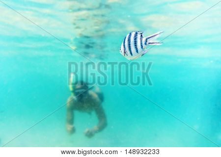 Skin diving or snokerling at shallow of beach distrub the sea life