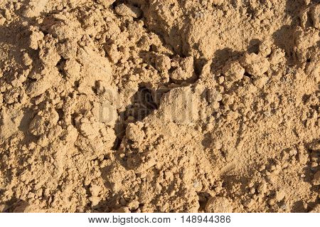 Small slides on the surface of the sand on the beach or in a sandbox illuminated by the evening sun.