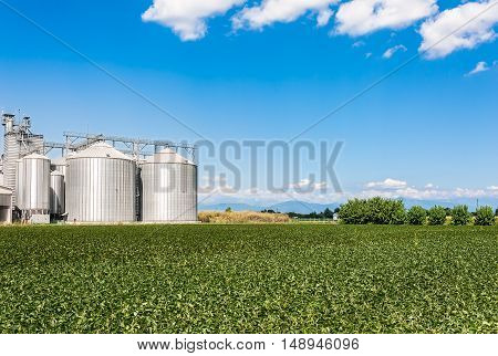 Soybean field and drying plant and silos