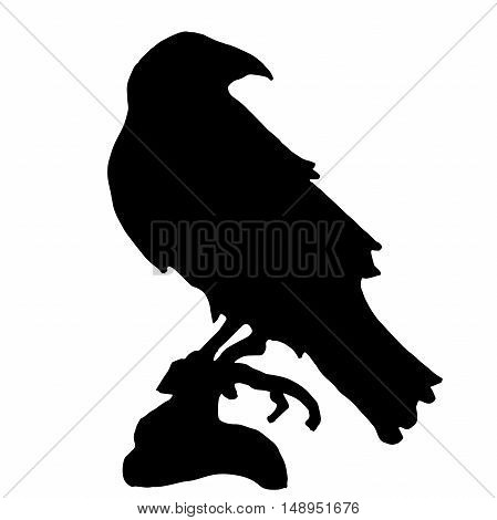 Very high quality original trendy  vector raven or crow silhouette