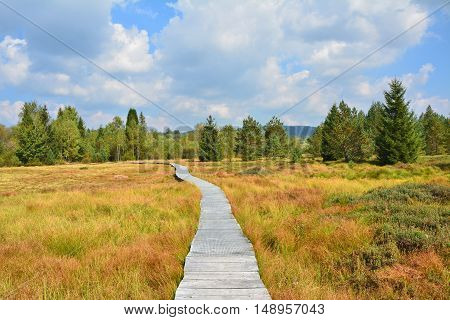 Path Through The Peat Bog