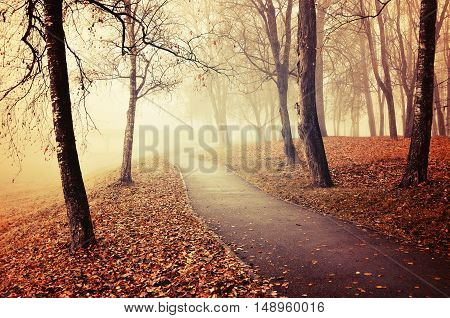 Autumn nature -misty autumn view of autumn park alley in heavy fog - foggy autumn landscape with bare autumn trees and orange fallen leaves. Autumn alley in heavy autumn fog. Vintage tones applied.