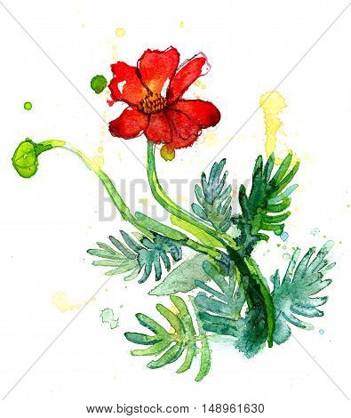 Freehand painted red flower isolated on white
