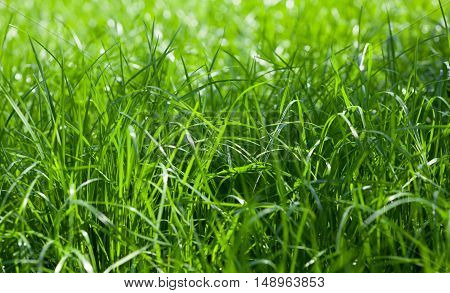 Closeup of growing grass on farmland low angel view