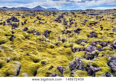 Lava stones covered with moss in Iceland