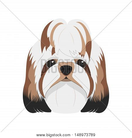 Shitzu dog isolated on white background vector illustration