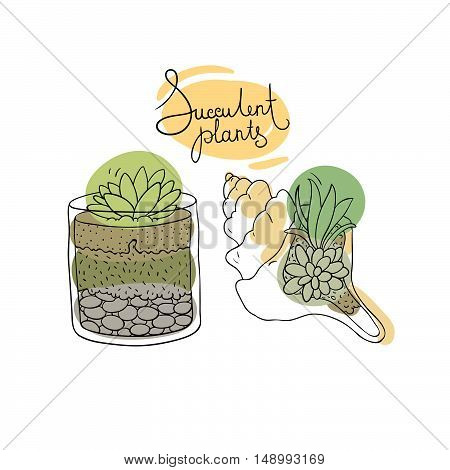 Vector glass terrariums and the seashell with succulents set. Hand drawing isolated objects on white background.