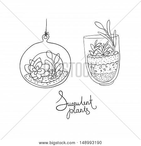 Vector glass terrariums with succulents set. Hand drawing isolated objects on white background.