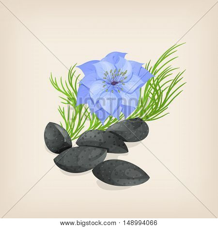 Nigella or black cumin with flowers and leaves. Vector illustration