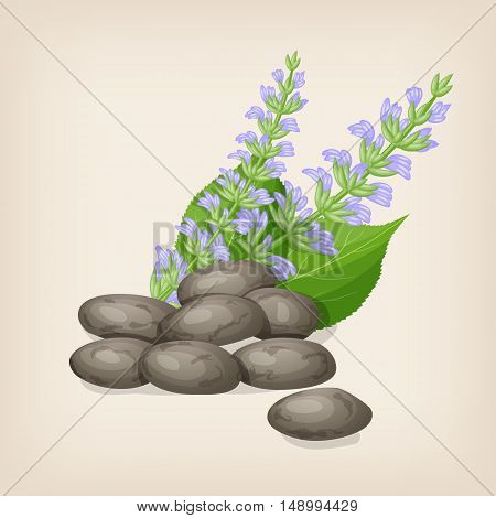 Chia seeds with flowers and leaves. Vector illustration.