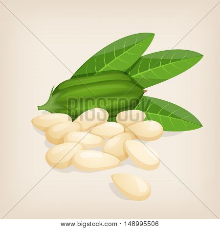 Sesame seeds with fruit and leafs. Vector illustration