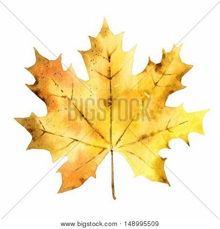 Autumn maple leaf isolated on white background. Watercolor illustration