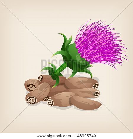 Seeds of a milk thistle with flowers Silybum marianum, Scotch Thistle, Marian thistle . Vector illustration.