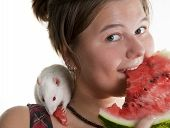 Girl and its pupil (white rat) eats a water-melon poster