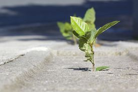 Small plant growing in a concrete sidewalk.