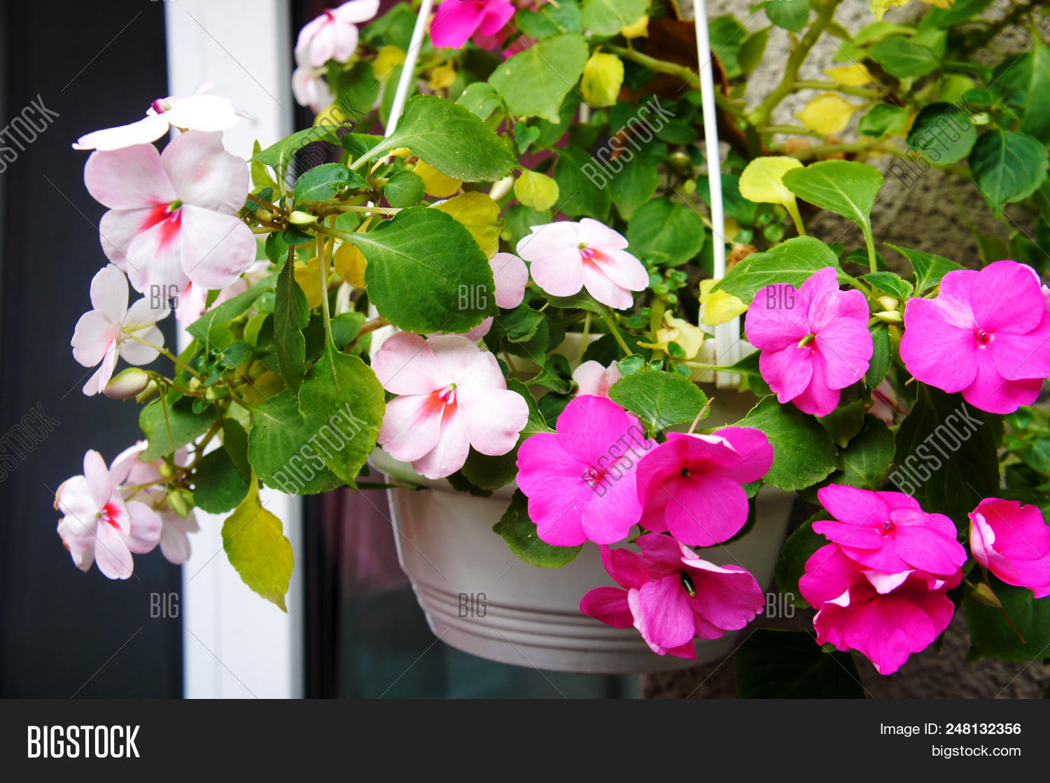 Pink Flowers Flower Image Photo Free Trial Bigstock