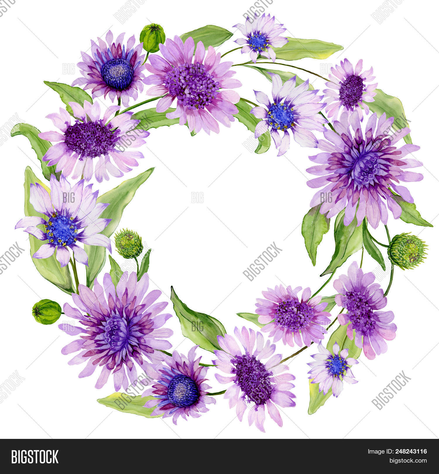 Round floral border image photo free trial bigstock round floral border beautiful blue and purple daisy flowers with green leaves on white background izmirmasajfo