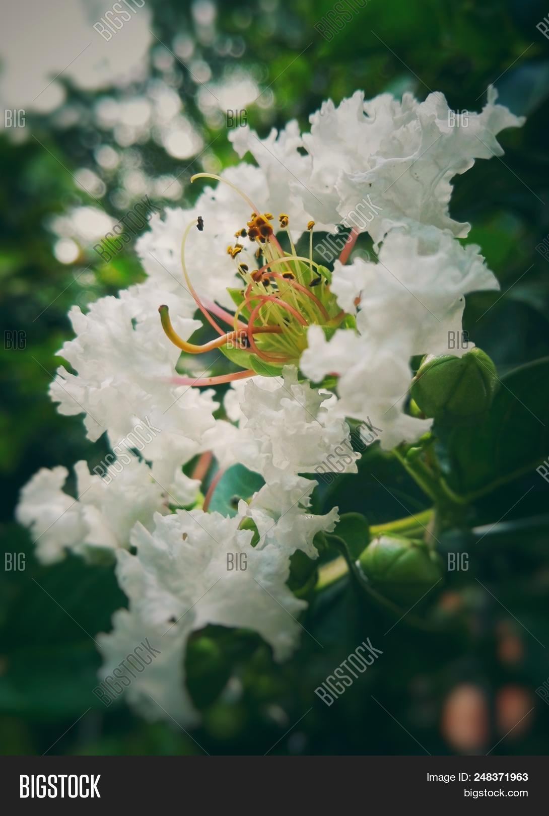 Beautiful White Flower Image Photo Free Trial Bigstock