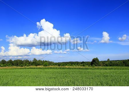Summer Landscape With Rural Field And White Clouds On Blue Sky. Big White Cloud Above Green Rural Fi
