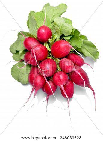 Ripe Radish Bundle, Isolated On White Background. Red Or Pink Radish With Green Leaves, Salad Vegeta