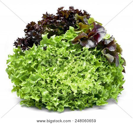 Delicious, Fresh Oak Salad Or Salad Mix. Tricolor Salad Or Mixed Lettuce, Isolated On White Backgrou