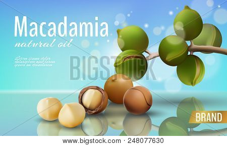 Realistic 3d Macadamia Nut Oil Cosmetic Shell Ad Template. Branch Leaves Nutshell. Light Summer Sky