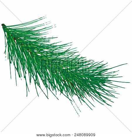 Green Spruce Branch. Vector Illustration Of A Christmas Tree Branch. Hand Drawn Green Christmas Tree