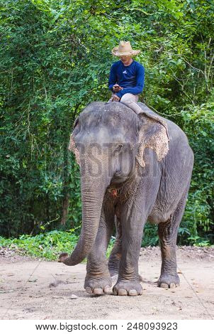 Siem Reap , Cambodia - Oct 15 : Cambodian Man Riding An Elephant At The Angkor Thom In Siem Reap Cam