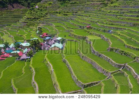 View Of Rice Terraces Fields In Banaue, Philippines. The Banaue Rice Terraces Are Unesco World Herit