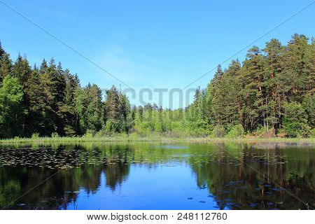 The green woods reflected in water. Fir and spruce forest. Lake in summer forest. Forest and nature lake. Forest and blue sky reflected in the lake. Summer lake landscape. Russian nature. Nature reserve. The lake in Russia. Travel in Russia
