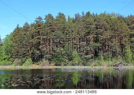 Green forest. Lake in summer forest. Forest and nature lake. Forest and sky reflected in the lake. Summer landscape. Russian nature. The green woods reflected in water. Fir and spruce forest in summer. Nature reserve. The lake in Russia. Travel in Russia