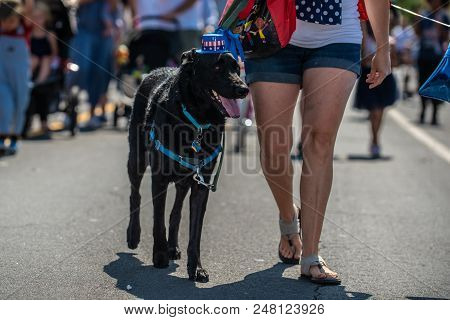 Large Black German Shepard Dog Participating In 4th July Celebration By Wearing Red, White, And Blue