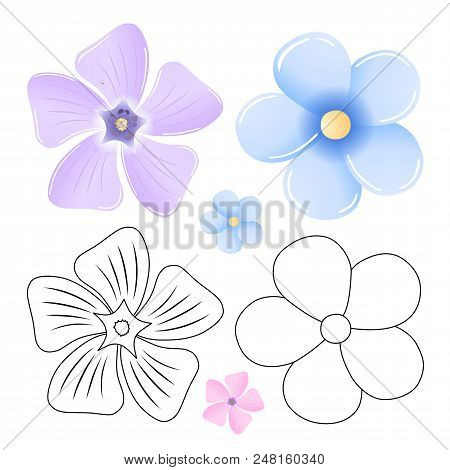 Periwinkle, Forget-me-not Pattern Flower Set Isolated On White Background (vector Illustration)