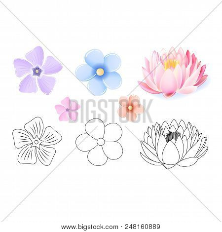 Pink Lotus, Periwinkle, Forget-me-not Pattern Flower Set Isolated On White Background (vector Illust