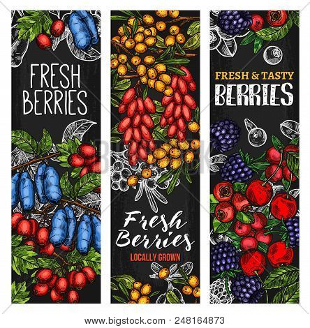 Wild Berry And Fresh Farm Fruit Blackboard Banner. Cherry, Blueberry And Blackberry, Forest Cranberr