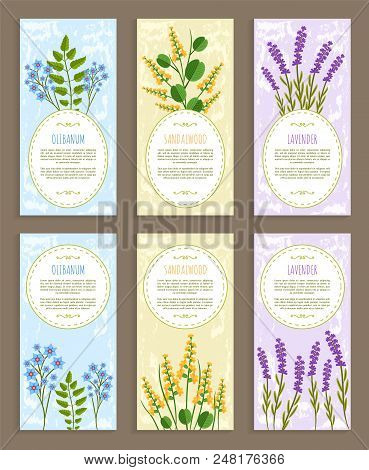 Olibanum Covers Collection Herbs And Aroma Elements Text Sample And Herbs Set Sandalwood And Lavende
