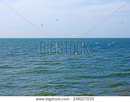 A Flock Of Seagulls Flying Over A Calm Deep Blue Sunlit Sea With Bright Blue Summer Sky