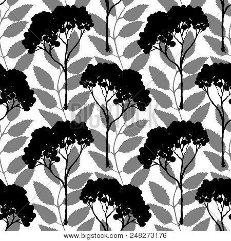 Monochrome Black Rowan Rowanberry Ashberry Silhouette Botanical Illustration Seamless Pattern Textur