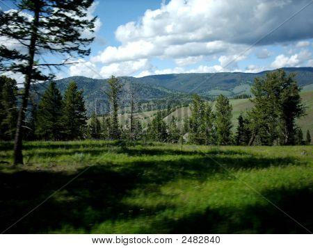 Wald und Bergen