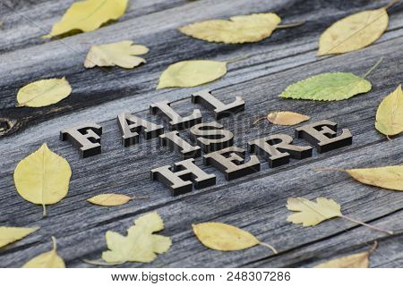 Inscription. Fall Is Here In Wooden Letters. Frame Of Yellow Leaves, Wooden Background