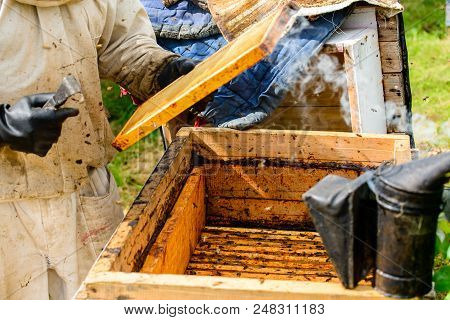 Unidentified Beekeeper Holding Honeycomb With Bees To Control Situation In Bee Colony
