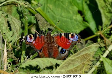 A Colored Butterfly Sits On The Green Leaves Of A Plant