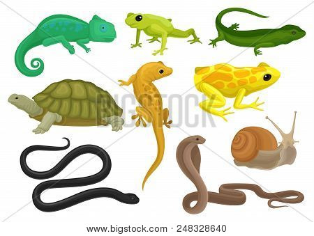 Reptile And Amphibian Set, Chameleon, Frog, Turtle, Lizard, Gecko, Triton Vector Illustration Isolat